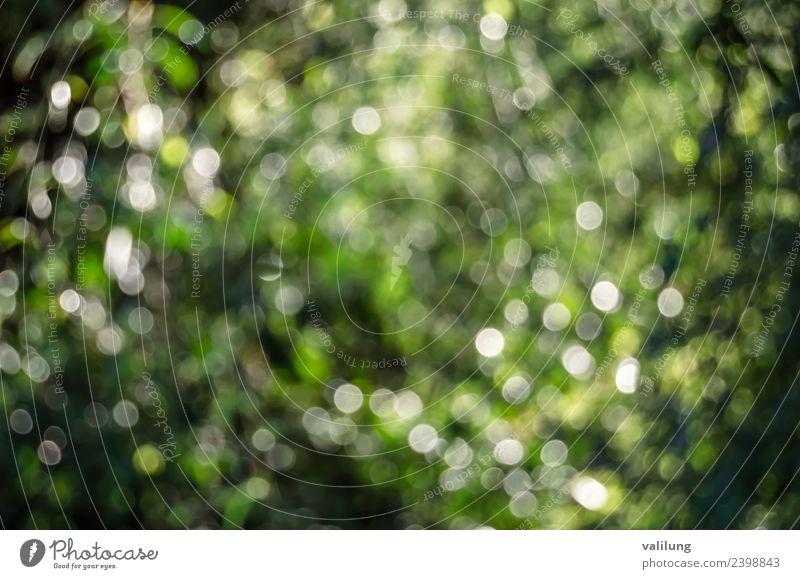 Buntes Naturmuster einer verschwommenen Herbstlandschaft schön Baum Blatt Grünpflanze Garten Park Wald natürlich Farbe Hintergrund Beautyfotografie Unschärfe
