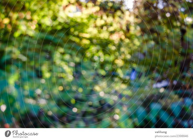 Buntes Naturmuster einer verschwommenen Herbstlandschaft schön Pflanze Baum Blatt Grünpflanze Garten Park Wald natürlich Farbe Hintergrund Beautyfotografie