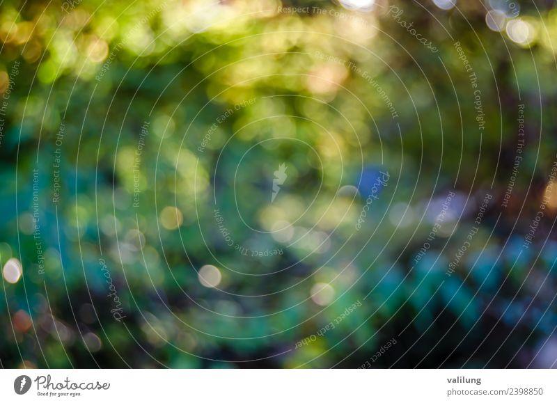 Buntes Naturmuster einer verschwommenen Herbstlandschaft schön Baum Blatt Wald natürlich Farbe Hintergrund Beautyfotografie Unschärfe farbenfroh fallen