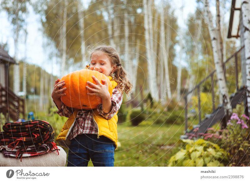 Kind Mädchen pflückt Kürbisse auf dem Bauernhof Gemüse Spielen Haus Garten Stuhl Halloween Herbst Wärme frisch lustig fallen Ernte Landwirt Eigenheimwachstum