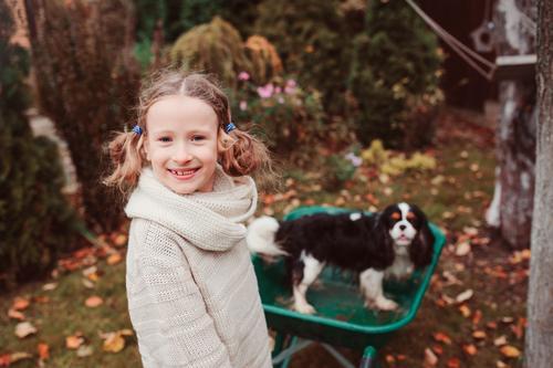 Kind Hund Blatt Freude Lifestyle Herbst Spielen Garten Freundschaft Wetter Kindheit Aktion Fröhlichkeit Jahreszeiten Haustier ländlich