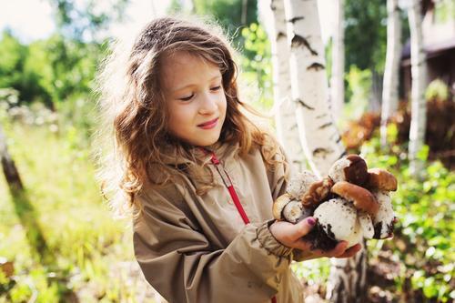 Kind Mädchen beim Sammeln von Waldpilzen 8-13 Jahre Kindheit Natur Pflanze Sommer Herbst Baum genießen Jagd Lächeln laufen Pilzsucher Waldspaziergang erkunden