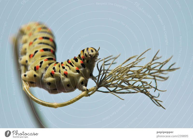 199... Himmel Pflanze Tier Tiergesicht Krallen Linie Streifen krabbeln elegant verrückt blau gelb grün Farbfoto Außenaufnahme Nahaufnahme Detailaufnahme