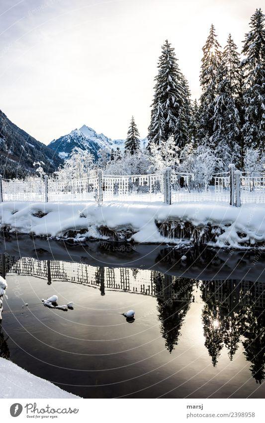 Angeblich soll es ja weit runterschneien... Natur Winter Schönes Wetter Eis Frost Schnee Baum Berge u. Gebirge Bach Zaun kalt natürlich Reflexion & Spiegelung