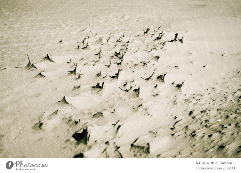 Spiekeroog l so spitz wie die bemerkungen Natur Meer Strand Umwelt Wärme Gras Küste Sand natürlich Urelemente trist Spitze Schönes Wetter Nordsee trocken