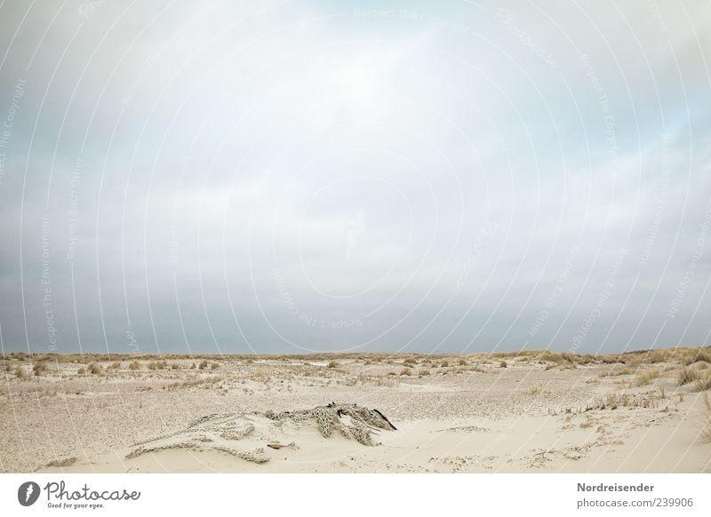Spiekeroog | Strandgut Natur Ferien & Urlaub & Reisen Sommer ruhig Erholung Ferne Landschaft Freiheit Küste Sand Horizont Stimmung Wetter frei Ausflug Tourismus