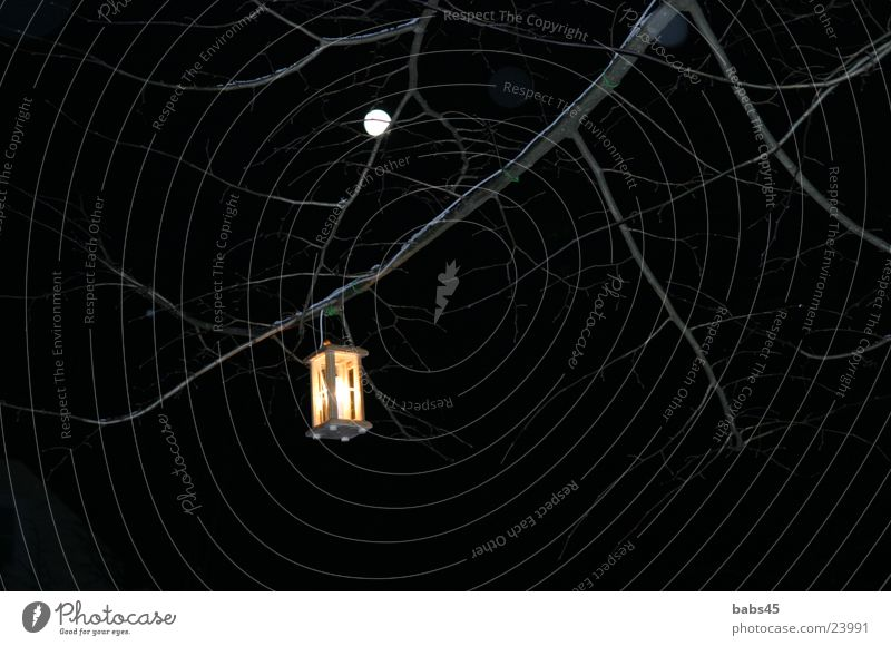 Laterne in der Nacht dunkel Ast Dinge Mond Vollmond