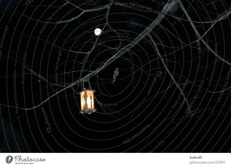 Laterne in der Nacht dunkel Ast Dinge Laterne Mond Vollmond