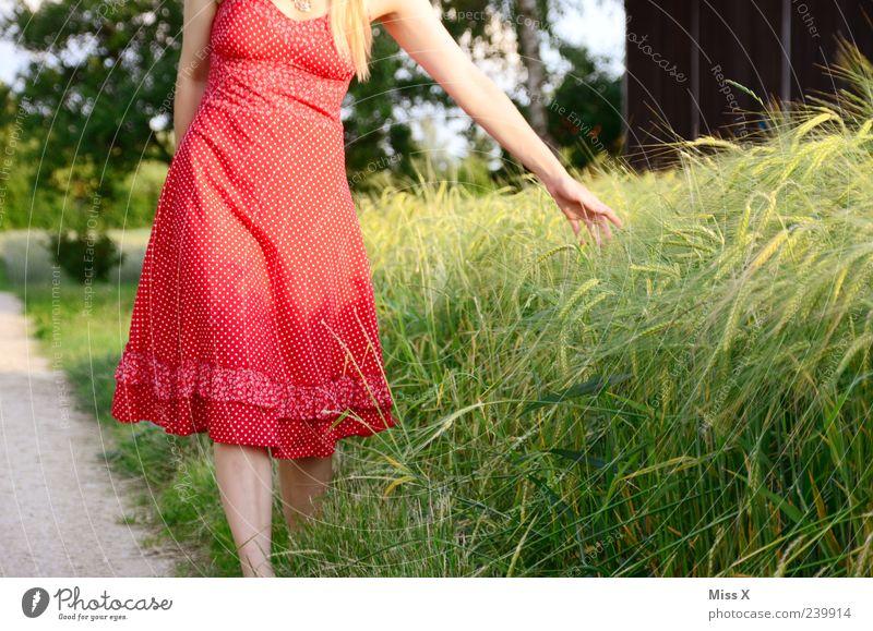 Kornfeld Zufriedenheit ruhig Mensch feminin Junge Frau Jugendliche Arme 1 18-30 Jahre Erwachsene Natur Sommer Pflanze Gras Sträucher Nutzpflanze Kleid blond