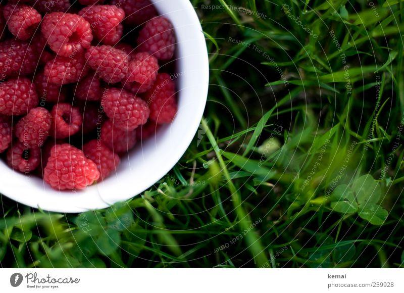 Frisch gepflückt Natur grün Sommer Pflanze rot Wiese Gras Garten Gesundheit Frucht Lebensmittel frisch Ernährung Idylle lecker Picknick