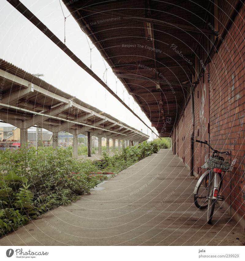 bahnsteig Himmel Pflanze Sträucher Grünpflanze Wildpflanze Bahnhof Bauwerk Gebäude Architektur Mauer Wand Fassade Fahrrad Bahnsteig trist Farbfoto Menschenleer