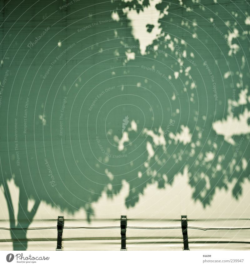 Geplanter Nachwuchs Baum Umwelt Industrie Baumkrone Handel Anhänger Abdeckung Schattenspiel Schnalle Schattenseite abstrakt Landschaftsarchitektur Schattendasein Landschaftspflege