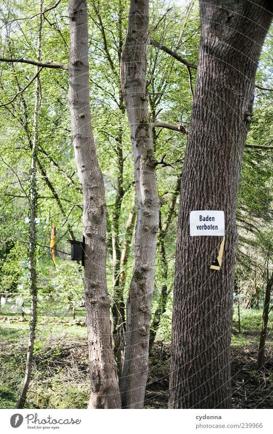 Baden verboten Umwelt Natur Baum Schriftzeichen Schilder & Markierungen Hinweisschild Warnschild Verbote Baumstamm Schwimmen & Baden Regel Farbfoto