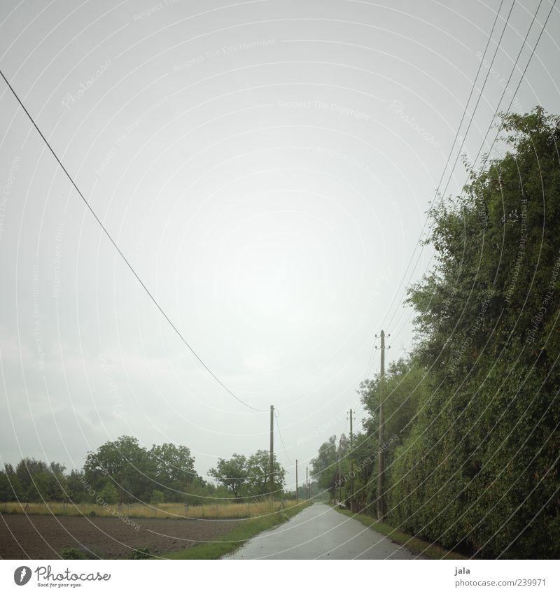 zwischenwelt Natur Landschaft Pflanze Himmel schlechtes Wetter Regen Baum Sträucher Grünpflanze Wildpflanze Feld Strommast Wege & Pfade trist Farbfoto