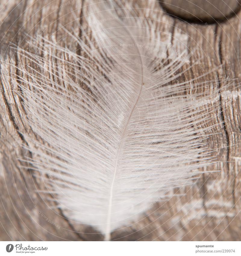 Holzgefieder Natur weiß Tier Holz grau braun liegen Feder silber