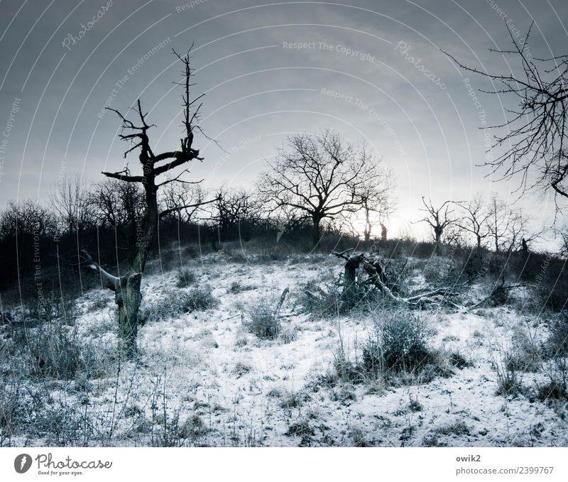 Unwirtliche Gegend Umwelt Natur Landschaft Wolken Horizont Winter Schönes Wetter Eis Frost Schnee Pflanze Baum Sträucher Ast dunkel kalt trist bizarr