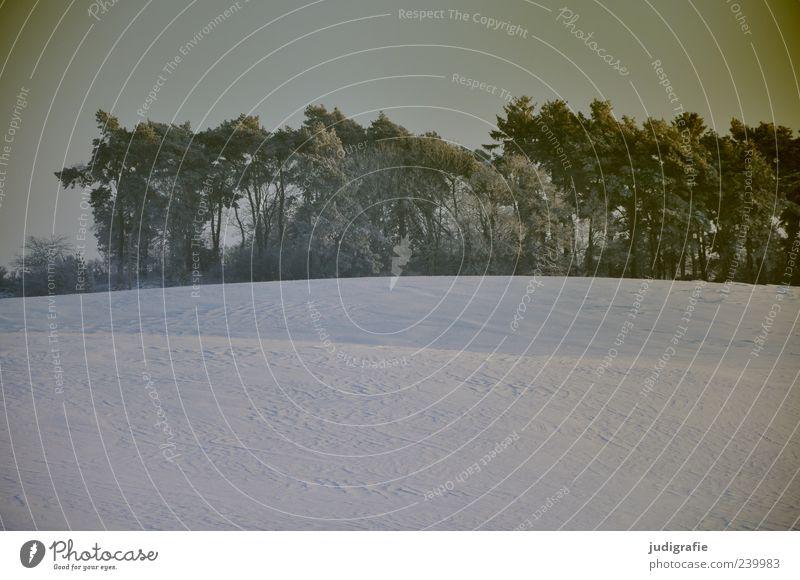 Winter Umwelt Natur Landschaft Pflanze Eis Frost Schnee Baum Wald kalt wild Stimmung Farbfoto Gedeckte Farben Außenaufnahme Menschenleer