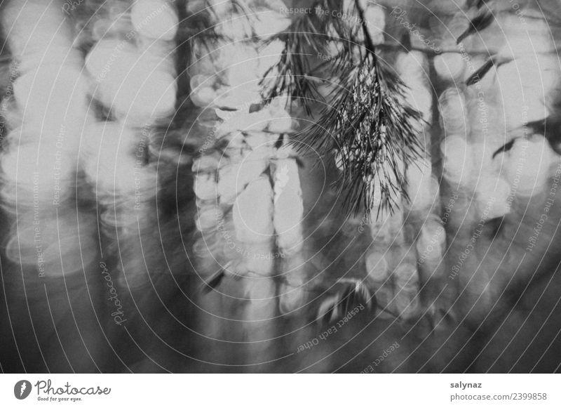 haiku IV Natur Frühling Baum Wald achtsam gewissenhaft Vorsicht Gelassenheit geduldig ruhig Selbstbeherrschung vernünftig Weisheit klug Traurigkeit Trauer