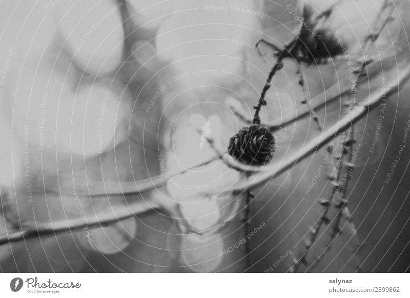 haiku VI Natur Pflanze Baum Wald Gefühle achtsam ruhig Vergänglichkeit Haiku Schwarzweißfoto Außenaufnahme Nahaufnahme Detailaufnahme Experiment abstrakt Muster