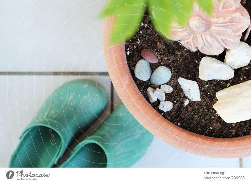 gartenwelt Pflanze Schuhe Stein Blume Terrakotta Gartenarbeit Blumentopf Fliesen u. Kacheln grün Clogs rund Erde weiß Farbfoto Außenaufnahme Nahaufnahme