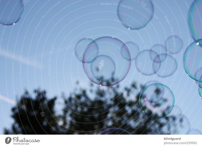Big Bubbles No Troubles Himmel blau schön Baum schwarz klein glänzend fliegen viele Vergänglichkeit Lebensfreude Schweben Seifenblase Leichtigkeit Lichtbrechung schimmern