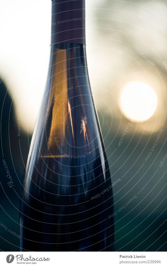 Auf Dein Wohl, Frollein Getränk Alkohol Wein Flasche schön Sonne Umwelt Natur glänzend genießen rot Stimmung einzigartig Farbe Stil malerisch Abenddämmerung