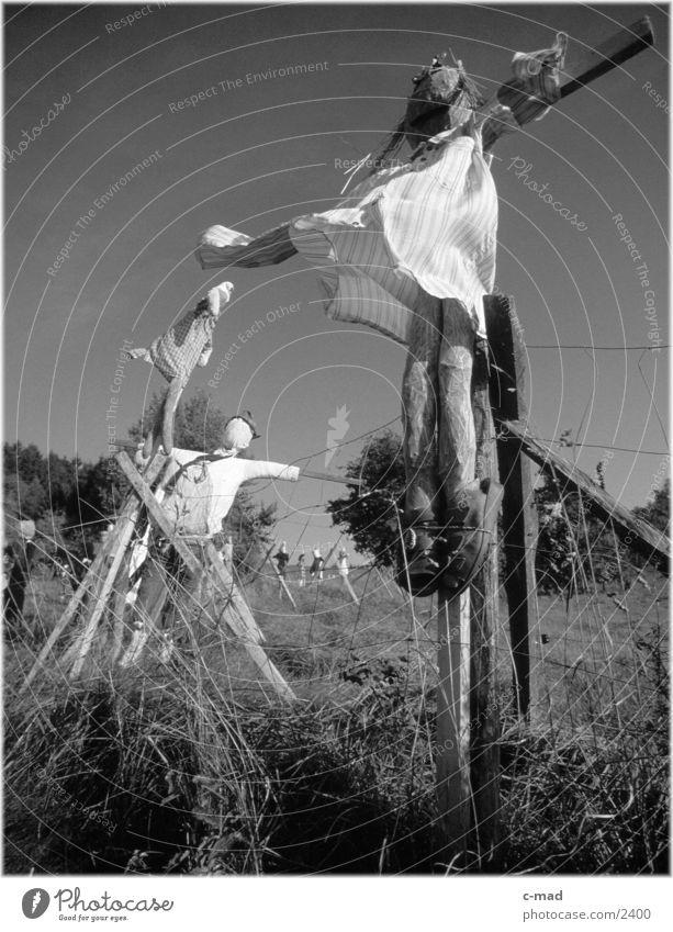 Vogelscheuchen IV Natur Wiese Landschaft obskur ländlich Vogelscheuche