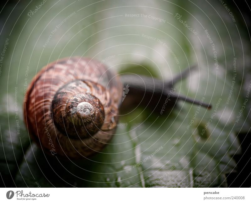 urform mobil Natur Urelemente Blatt Tier Schnecke 1 einfach grün Schneckenhaus rotbraun schön Unschärfe Farbfoto Außenaufnahme Textfreiraum oben