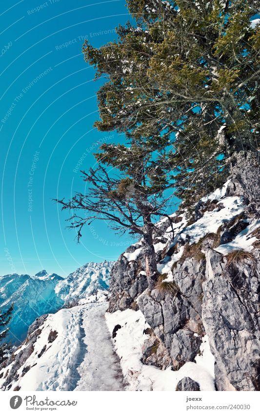 Eis gefällig? Himmel Natur blau weiß grün Baum Winter kalt Schnee Berge u. Gebirge oben Wege & Pfade grau hoch Alpen Schönes Wetter