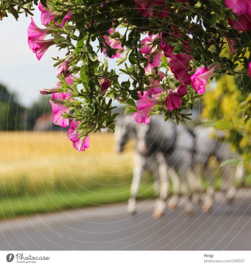 durch die Blume... Natur Pflanze Sommer Schönes Wetter Blatt Blüte Straße Tier Pferd 2 Bewegung Blühend Wachstum außergewöhnlich schön natürlich gelb grün rosa