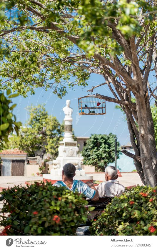 zwei Männer sitzen im Park mit einem Vogelkäfig Natur Ferien & Urlaub & Reisen Sommer Baum Erholung ruhig Reisefotografie Wärme genießen Pause Fernweh Kuba