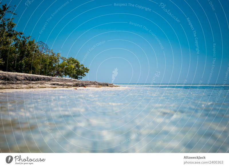 am Strand einer paradiesischen Insel in der Karibik Tag Menschenleer Paradies Palme schön traumhaft Wasser Meer maritim Blauer Himmel Wolkenloser Himmel Sommer