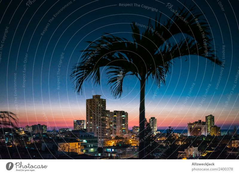 Skyline von Havanna bei Nacht mit Palme Panorama (Aussicht) Menschenleer Sommer Sonne Ferien & Urlaub & Reisen Insel Ferne Meer Wolkenloser Himmel Stadt