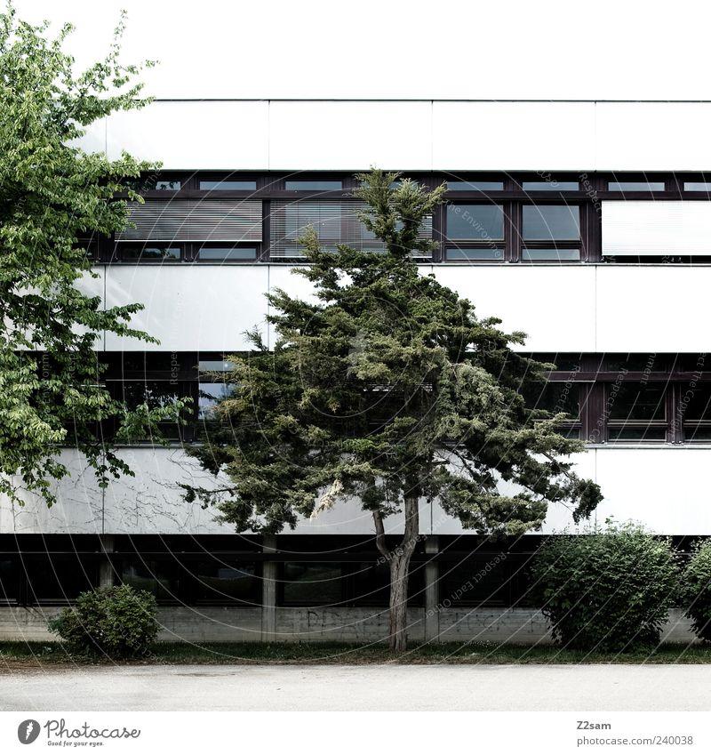 pausenhof Haus Baum Sträucher Platz Gebäude Architektur dunkel eckig einfach grau grün ästhetisch Schulhof Fenster Linie Schulgebäude Außenaufnahme
