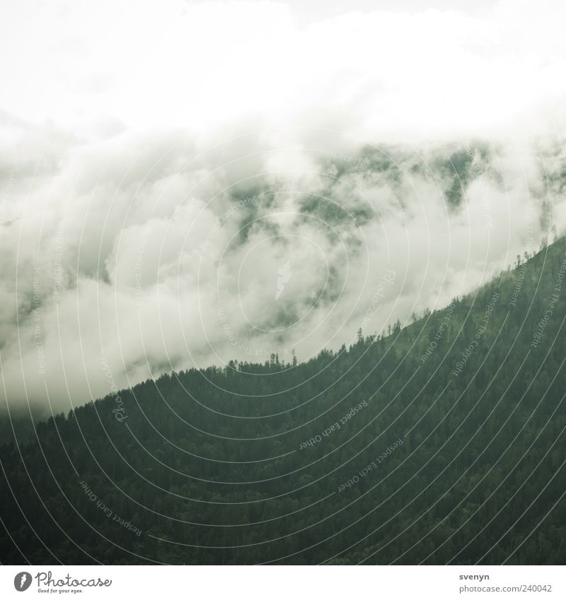 Weisse Welle Natur grün Wolken Wald Landschaft Berge u. Gebirge Alpen schlechtes Wetter Wolkenfeld Wolkenwand Wolkenschleier