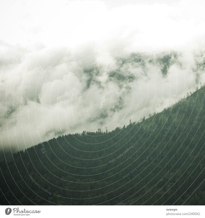 Weisse Welle Natur Landschaft Wolken schlechtes Wetter Wald Alpen Berge u. Gebirge grün Außenaufnahme Menschenleer Morgen Wolkenfeld Wolkenwand Wolkenschleier