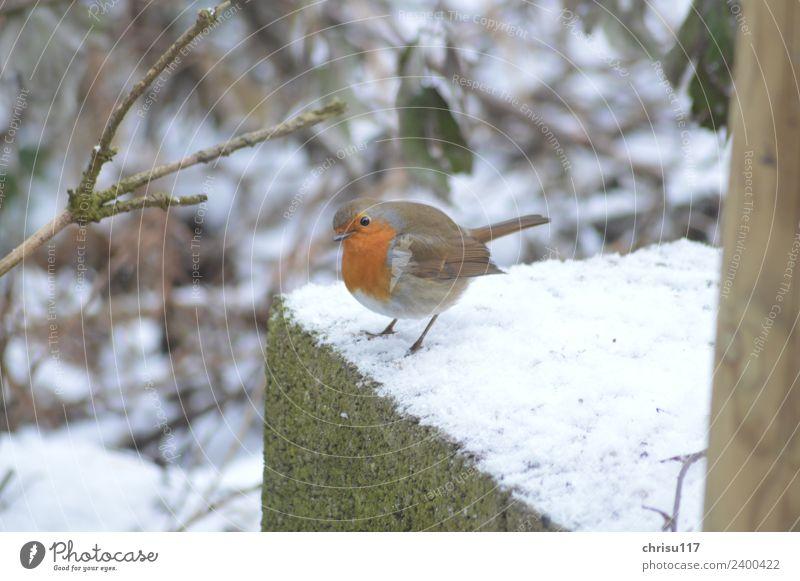 Watt, wer bist Du denn? Natur Winter Garten Stadtrand bevölkert Hütte Terrasse Tier Wildtier Vogel 1 beobachten Blick stehen lernen schön klein Neugier niedlich