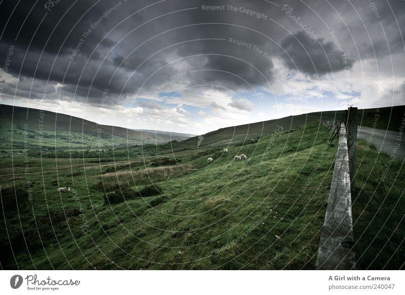 Dark Peak Himmel Natur grün Pflanze Sommer Einsamkeit Wolken Umwelt Landschaft dunkel Gras Frühling grau Horizont außergewöhnlich wild