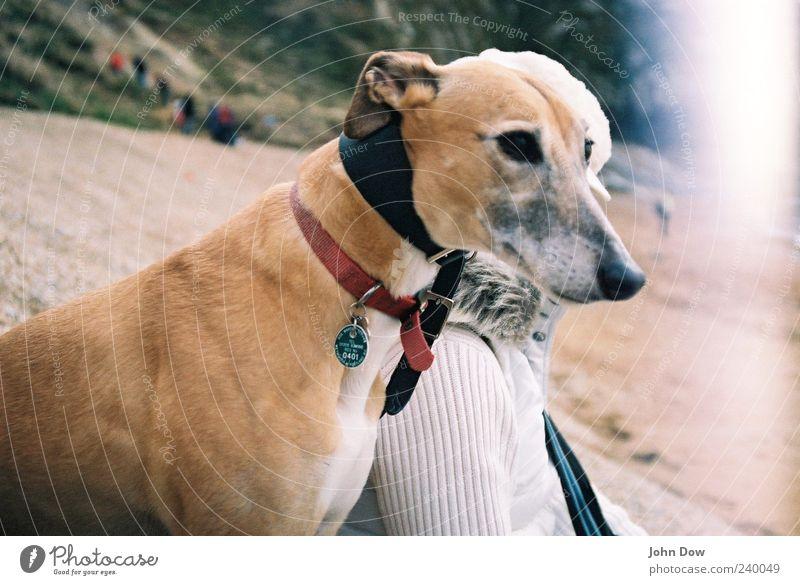 two in one Freizeit & Hobby 1 Mensch Strand Haustier Hund Tier elegant Tierliebe Zusammenhalt Windhund Light leak Treue Hundeblick Hundeschnauze Außenaufnahme