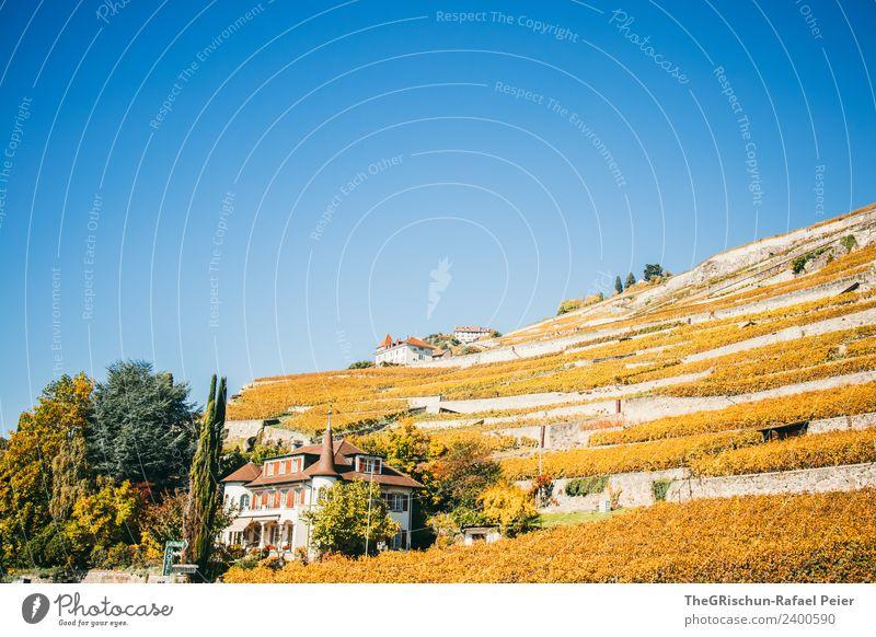 Weinberg Umwelt Natur Landschaft blau braun gelb gold grün Terrassenfelder Genfer See Schweiz Weintrauben Haus Schloss Idylle Baum Farbfoto Außenaufnahme