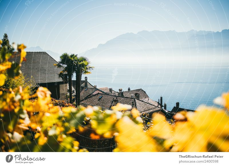 Seesicht Umwelt Natur Landschaft blau braun gelb gold Dunst Schweiz Genfer See Haus Palme Dach Weinberg Weintrauben Berge u. Gebirge Aussicht Farbfoto