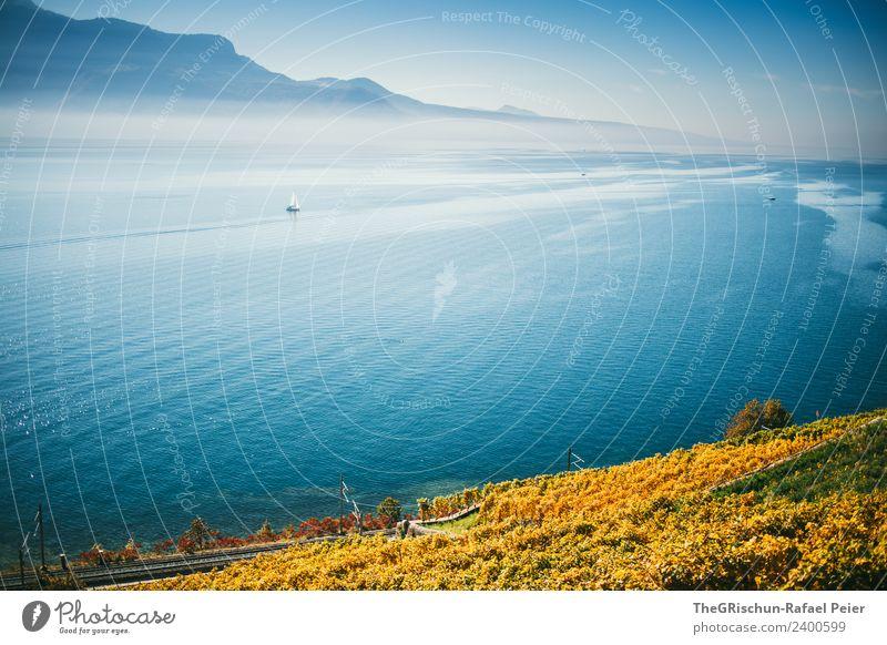 Genfersee Umwelt Natur Landschaft blau gelb gold Herbst See Stimmung Genfer See Schweiz Weinberg Weinlese Weintrauben Strömung Berge u. Gebirge niedlich