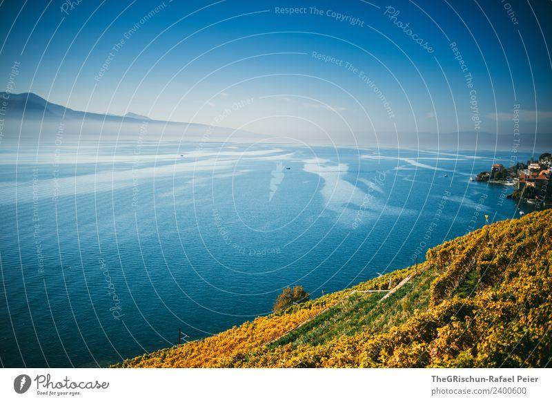 Genfersee Natur blau Landschaft Berge u. Gebirge gelb Herbst kalt See gold Aussicht Wein Schweiz Dunst Blauer Himmel Weltkulturerbe Weinberg