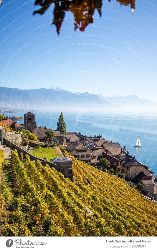 Haus am See Umwelt Natur Landschaft blau gelb gold Segelboot Berge u. Gebirge Dorf Genfer See Wein Weinberg Herbst mehrfarbig Wasser Dunst Nebel Aussicht