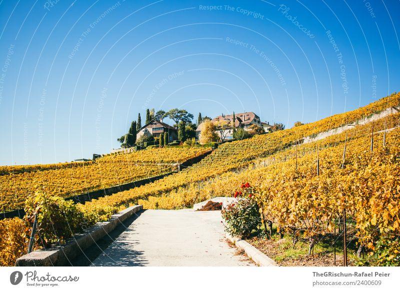 Haus in den Reben Umwelt Natur Landschaft blau braun gelb gold rot Weinberg Wege & Pfade Straße niedlich Herbst Weltkulturerbe Schweiz Farbfoto Außenaufnahme