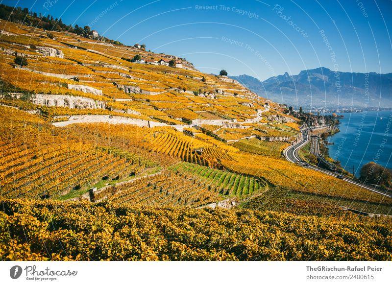 Weinberge Natur Landschaft Pflanze blau braun gelb gold grün Weintrauben Berge u. Gebirge Genfer See Aussicht Ferne Berghang Herbst Schweiz Weltkulturerbe