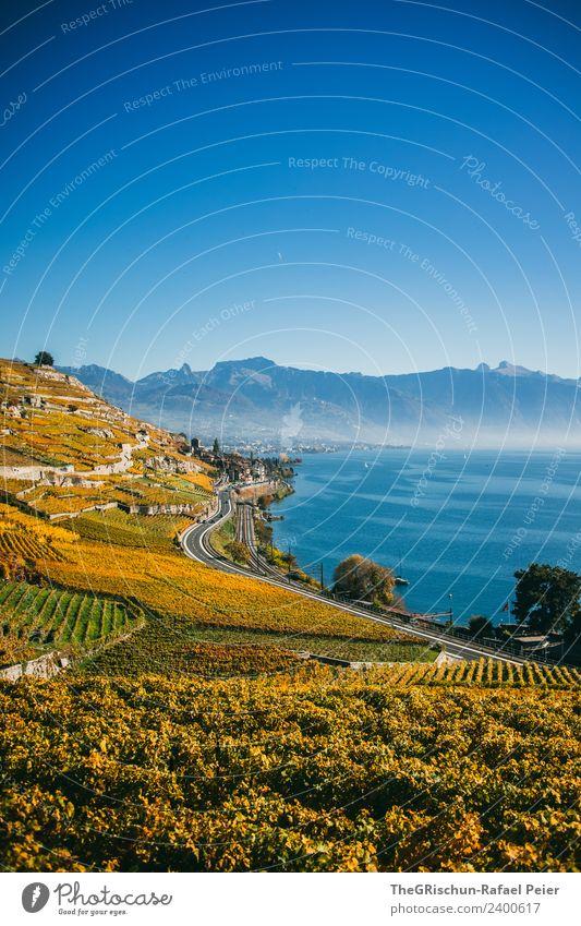 Rebberg Umwelt Natur Landschaft blau braun gelb gold grün weiß Himmel Berge u. Gebirge Wasser See Genfer See Weltkulturerbe Wein Pflanze Weintrauben Weinberg