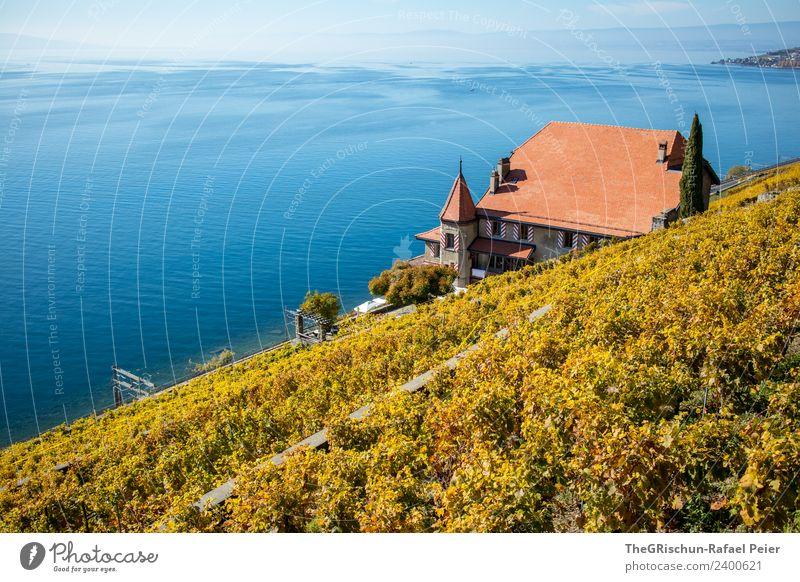 Haus am See Umwelt Natur Landschaft blau braun gelb gold haus am see Genfer See Dach Turm Wein Weinberg Strömung Aussicht reich Weltkulturerbe Schweiz Farbfoto
