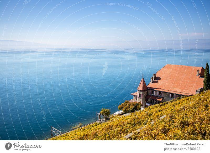Villa am See Umwelt Natur Landschaft blau braun gelb gold grün Dach Turm Wein Weinberg Wasser Genfer See Aussicht Pflanze Schweiz Weltkulturerbe Himmel Dunst