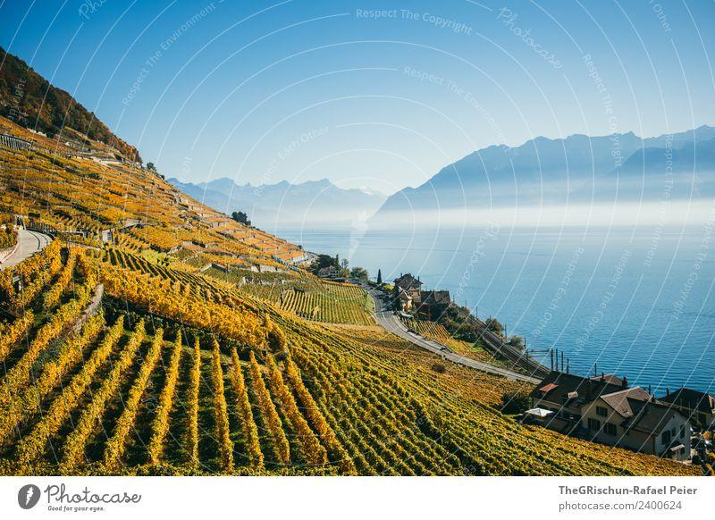 Reben Natur Landschaft blau braun gelb gold weiß Wein Wasser Weinberg Nebel Schleier Berge u. Gebirge Genfer See Straße Pflanze Aussaat Herbst Schweiz